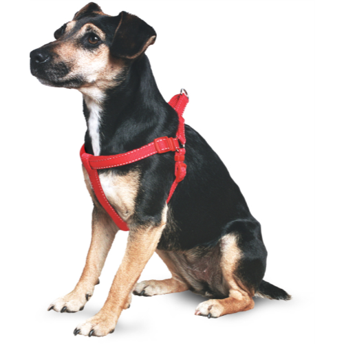 Ancol Nylon Padded Dog Harness Red 76-99cm