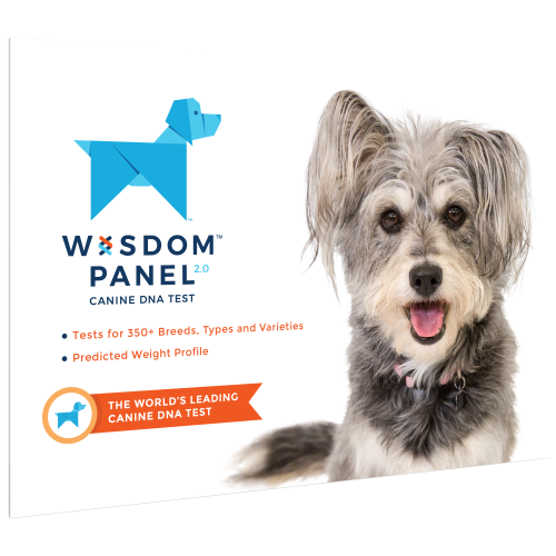 Wisdom Panel 2.0 Dog DNA Testing Kit DNA Testing Kit