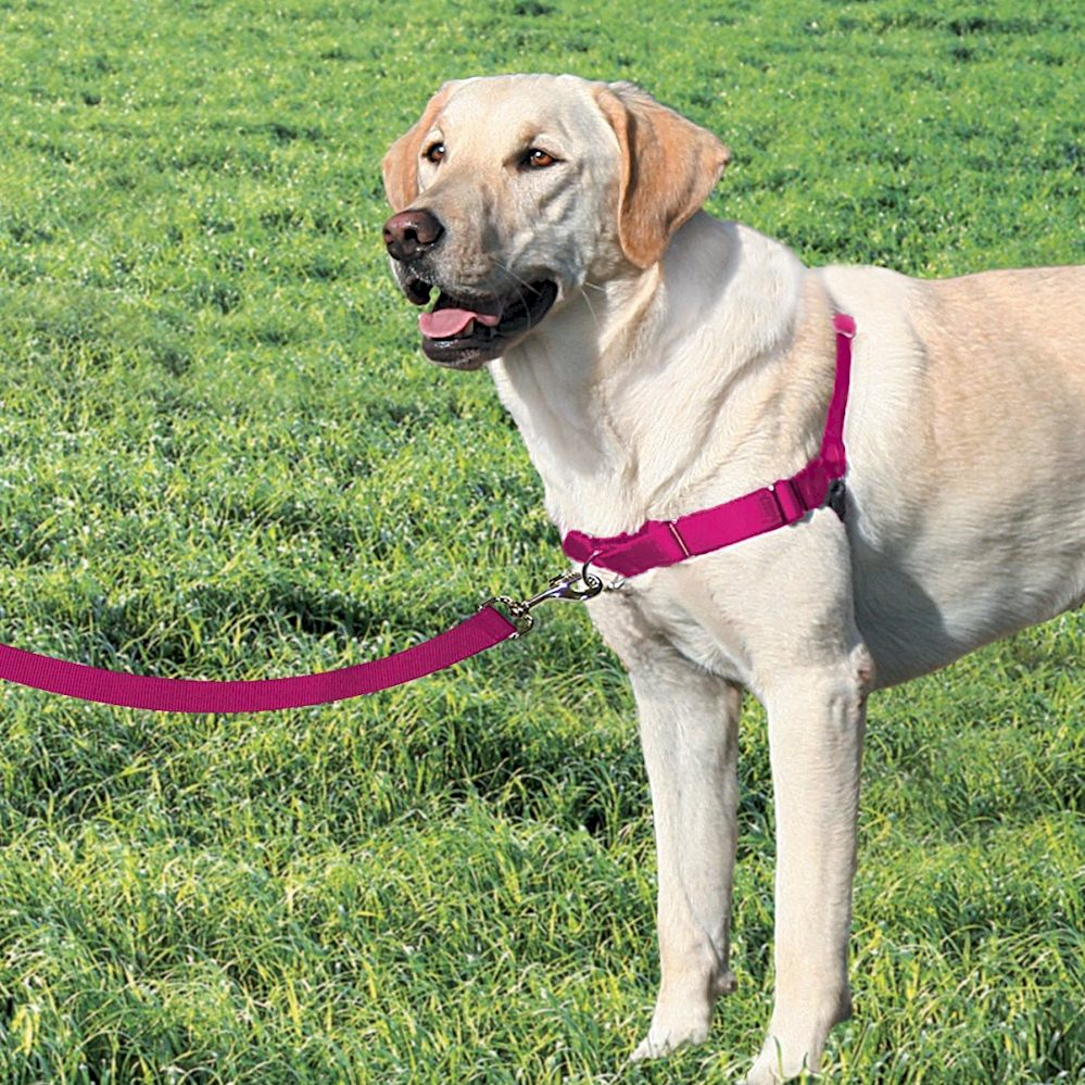 Easy Walk Dog Harness - Large - Raspberry Pink