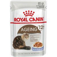 Royal Canin Ageing 12+ in Jelly - 12 x 85g